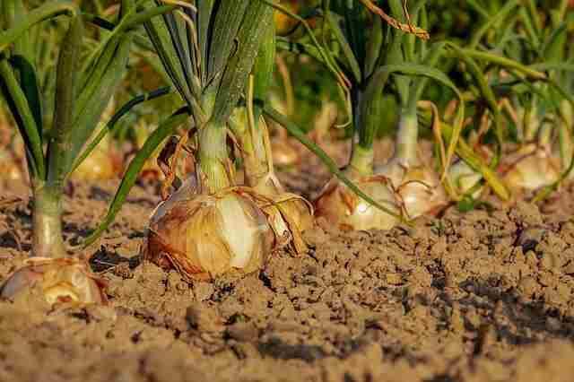 现代农艺技术专业